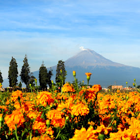 Volcano and flowers by Cristobal Garciaferro Rubio - Landscapes Mountains & Hills