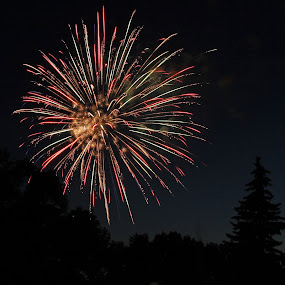 by Liz Huddleston - Abstract Fire & Fireworks ( summer, trees, fireworks, night, july,  )