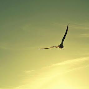 freedom  by Filio Starova - Animals Birds
