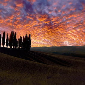 il Boschetto dei Cipressi by Mark Soetebier - Landscapes Sunsets & Sunrises ( clouds, montalcino, tuscany, sunset, val d'orcia, unesco, san quirico d'orcia,  )