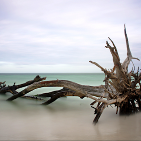Gulf Of Mexico  by Jeremy Barton - Landscapes Beaches ( wood, tree, florida, longboat key, sea, gulf of mexico, usa,  )