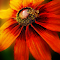 *******1NEWONEbee on flower copy.jpg