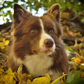 Emy by Bojan Kolman - Animals - Dogs Portraits