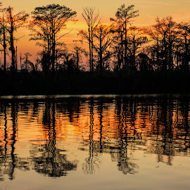 A Water Oak and Cypress Forest reflected in the waters of the East Pearl River at the Honey Island Swamp. by Wendy  Walters - Landscapes Forests