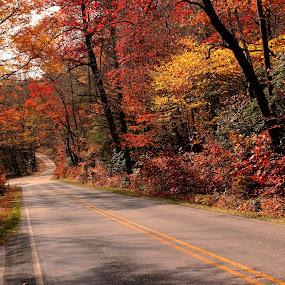 Autumn Roadscape by Avishek Bhattacharya - Landscapes Travel ( empty road, autumn, pisgah, fall foliage, road, roadscape, canon t3i, fall color,  )