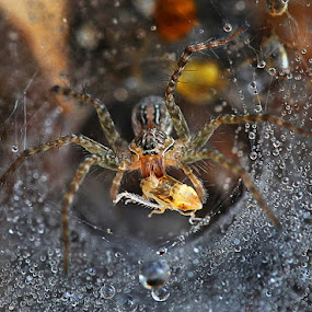 breakfast by Adhii Motorku - Animals Insects & Spiders