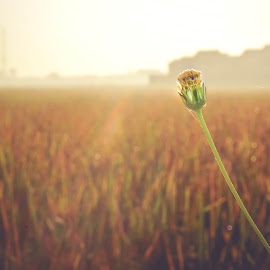 Standalone by Ichsan Ralendy - Nature Up Close Leaves & Grasses ( nature, grass, green, sunset, sunsets, bush, flower )