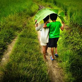 walk on greens.jpg