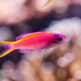 by Denis Keith - Animals Fish