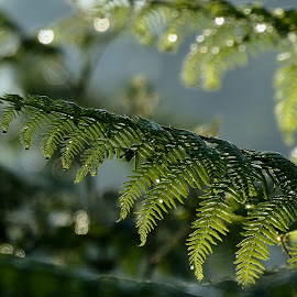 Fern by Lyn Simuns - Nature Up Close Other plants ( forest, fern )