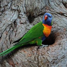 by Clare Draper - Animals Birds