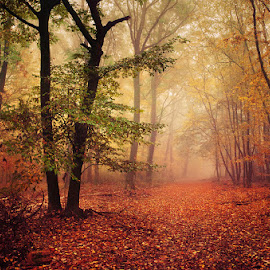 20171021-DSC_2675 by Zsolt Zsigmond - Landscapes Forests ( fog, autumn, fall, trees, forest, woods, mist )