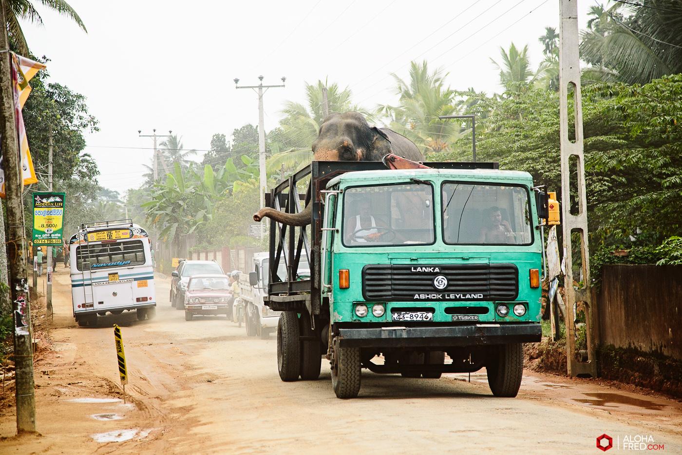 0079 - Sri Lanka - CP1A7537