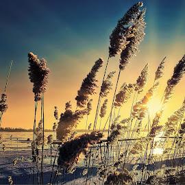 winter sunrise by Tomasz Marciniak - Landscapes Sunsets & Sunrises ( winter, lake, sunrise )