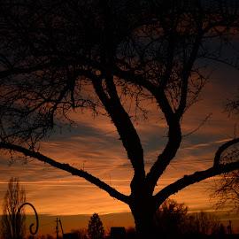 Sunrise by Denton Thaves - Landscapes Sunsets & Sunrises ( sunrise )