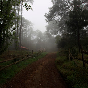 Fog and forest by Cristobal Garciaferro Rubio - Landscapes Forests ( pines, fog, niebla, forest, road, pinos )