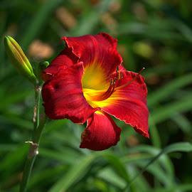 Time of the Season  by Larry Bidwell - Flowers Single Flower
