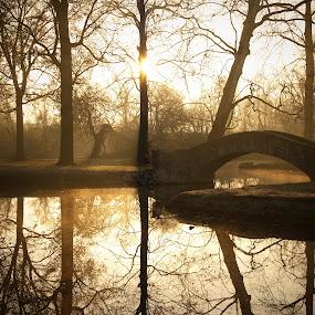 Golden Bridge by Karen Santilli - Landscapes Waterscapes ( water, reflection, park, sunset, trees, lake, sunrise, bridge, gold, morning )