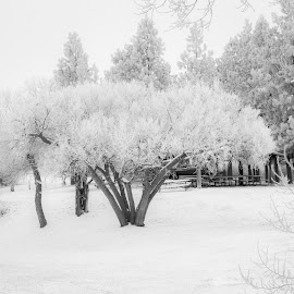 Frosty Winter Morning by Julie Wooden - Landscapes Weather ( north dakota, park, hebron, little knife river, white, overcast, frozen, landscape, winter, nature, outdoors, cloudy, trees, lions park, scenery, frosty )