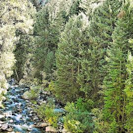 Fish Creek by Cyndi McCoun - Landscapes Forests ( water, pines, creek, colorado, trees, rocks, river )