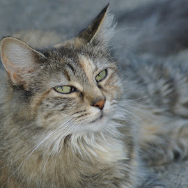 Luna by Vicki McCourt - Animals - Cats Portraits ( cat, animals, pets, fur, eyes )