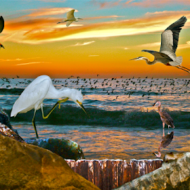 { The Pass @ Sunset ~ Inlet to the gulf ~ 7 July }  by Jeffrey Lee - Digital Art Animals ( { the pass @ sunset ~ inlet to the gulf ~ 7 july } )