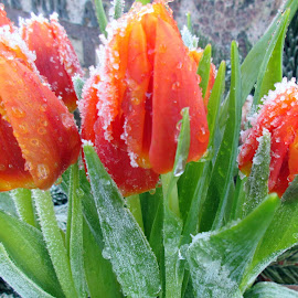 by Jette Helbig Hansen - Flowers Flower Gardens