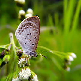 tiny butterfly by Hendrata Yoga Surya - Instagram & Mobile Android ( kupu kupu, butterfly, insects )