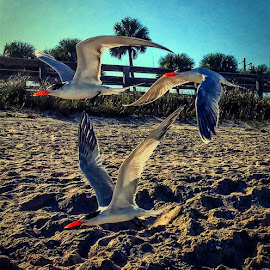 Photo Bomb by Tony Allison - Instagram & Mobile Android ( vero beach, cell phone, beach,  )