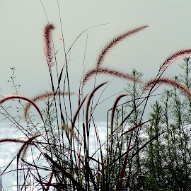 Morning fog in Montreux by Serguei Ouklonski - Nature Up Close Leaves & Grasses ( plant, fog, grass, montreux, lake, morning )