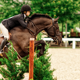 Competition by Heather Brooks - Sports & Fitness Other Sports ( equestrian, horseman, horsewoman, competition, saddles, horse, horseback, contestant, hunter, jumper, equine, hurdles, horses,  )