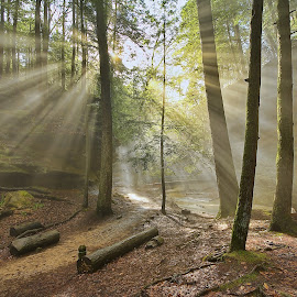 Light From Heaven by Bud Schrader - Landscapes Caves & Formations ( god beams, hocking hills, trails, old mans cave, sun rays )