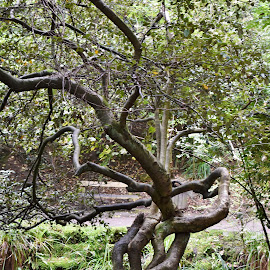 Entwined by Eloise Rawling - Nature Up Close Trees & Bushes ( tree, autumn, entwined )