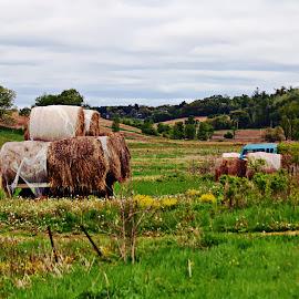 Hixton hills by Jon Radtke - Landscapes Prairies, Meadows & Fields ( hixton hills )