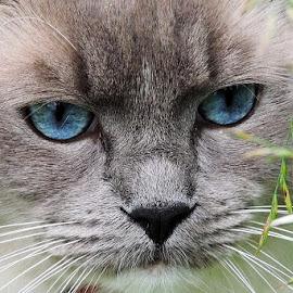 by Jana Kubínová - Animals - Cats Portraits
