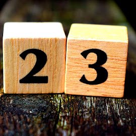 23 by Janine Kain - Artistic Objects Other Objects ( wood, depth of field, 23, number, blocks, bokeh )