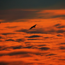 freedom by Urša Kokalj - Landscapes Cloud Formations ( dreaming, flying, freedom, morning, birds )