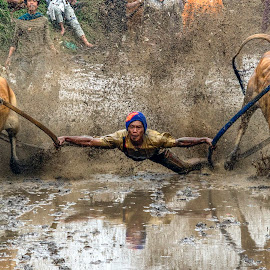 cow race ( iam supratman and not superman ) by Fajar Vandra - Sports & Fitness Other Sports