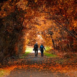 Life road by Bota Dorin - City,  Street & Park  City Parks