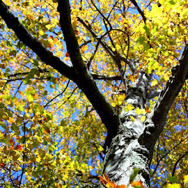 A few yellow leaves by Janet Smothers - Nature Up Close Trees & Bushes