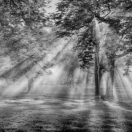 Sunrays by Pravine Chester - Black & White Landscapes ( monochrome, park, black and white, sunrays, sun )