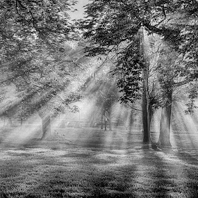 Sunrays by Pravine Chester - Black & White Landscapes ( monochrome, park, black and white, sunrays, sun,  )