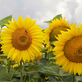 summer,summer.... by LADOCKi Elvira - Flowers Flowers in the Wild ( nature, flowers, garden )