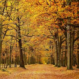 Allée cavalière by Gérard CHATENET - Landscapes Forests