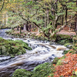 Autumn Flood by John McCullough - Landscapes Waterscapes ( tollymore, shimna, autumn, rivers, n. ireland )