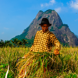Yeaahh,  my Crops ! by OC Andoko - People Portraits of Men ( rice field, farmer, padi, crops, harvest,  )