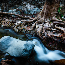 Pace of nature by Theodoros Theodorou - Nature Up Close Trees & Bushes ( 16mm f1.4 r wr, waterscape, roots, x-t1, fujinon, flow, cyprus, winter, nature, tree, fujifilm, river bank, deep roots, river,  )
