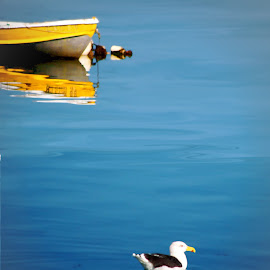 Yellow Rowboat And Seagull by Robin Amaral - Uncategorized All Uncategorized ( water, reflection, harbor, waterscape, yellow, rowboat, boat, cape cod, provincetown, skiff, bird, seagull, blue, floating, moored, dinghy )