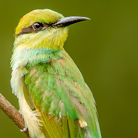 by S Balaji - Animals Birds