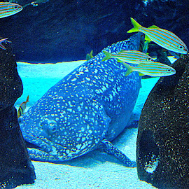 Under The Sea by Christy Stanford - Animals Sea Creatures ( water, underwater, fish, creatures, ocean )